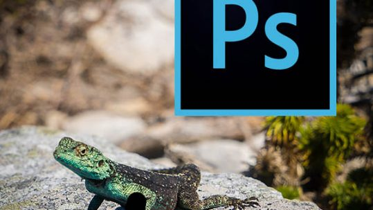 Essential photoshop shortcuts with text