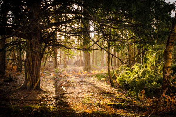 new forest into the light with details after processing