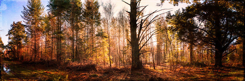 new forest pan into the light